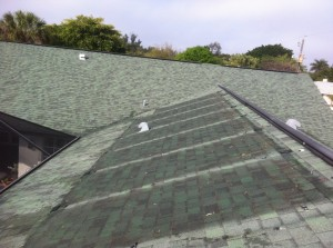 Clean Shingle Roof Beneath Solar Panels